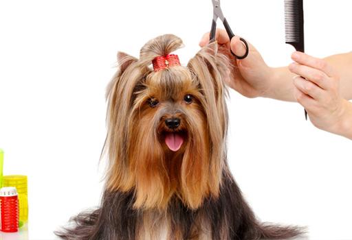 5 Ventajas De Llevar A Tu Mascota A Una Peluquería Canina