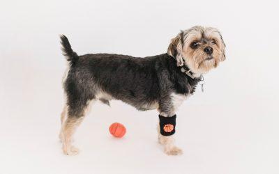 El ejercicio físico, fundamental  para nuestros perros