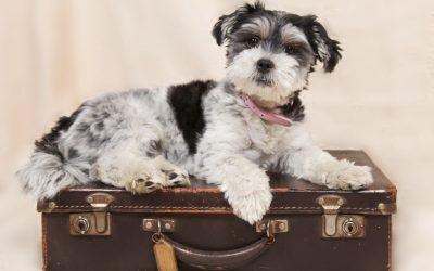 ¿Qué opciones tengo de viajar con mi mascota?